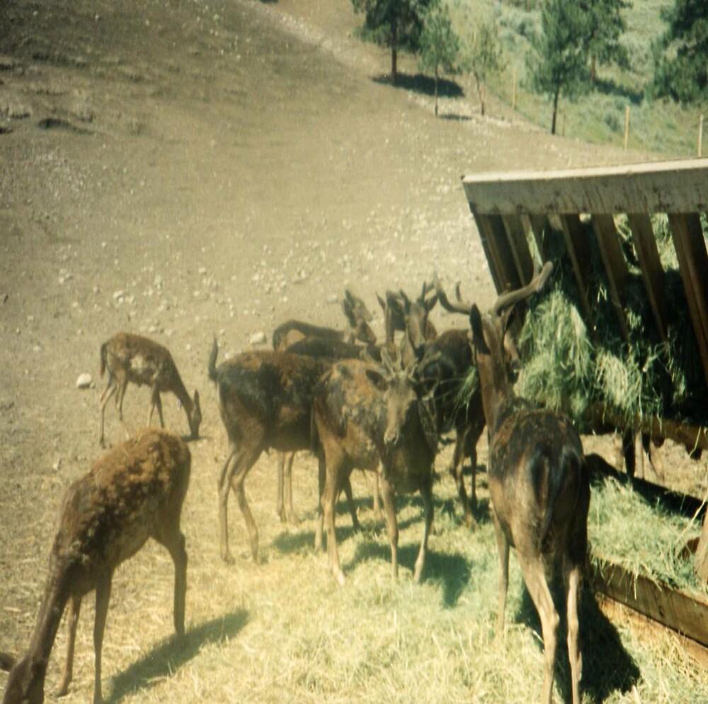deer family by oilersfan11