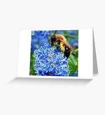 Pollinated! Greeting Card