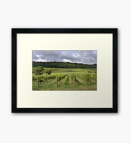 Pemberton Vineyard - Western Australia  Framed Print