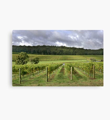Pemberton Vineyard - Western Australia  Canvas Print