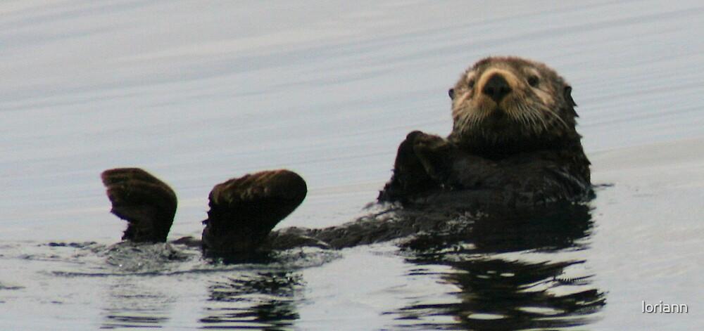 Sea Otter by loriann