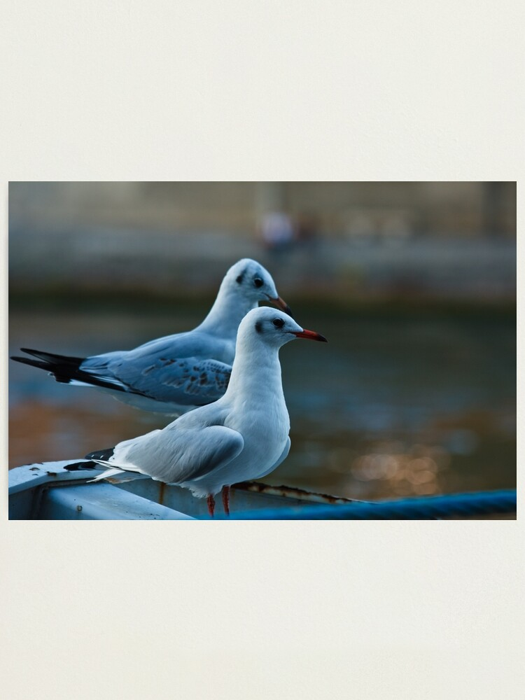 Alternate view of Seagulls Photographic Print