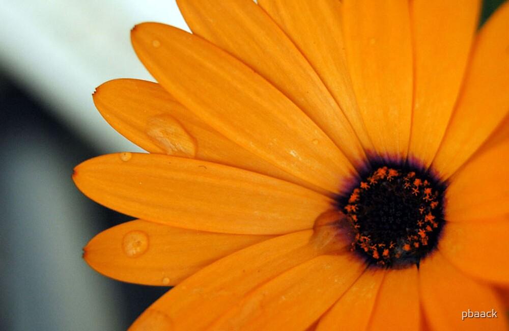 Orange Flower by pbaack