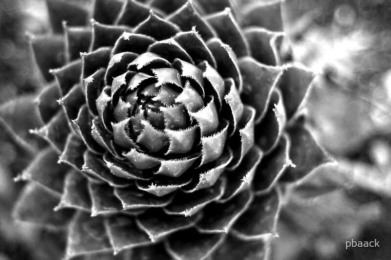 Cacti by pbaack