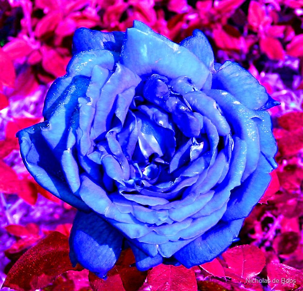 Rose Blue by Nicholas de Boos