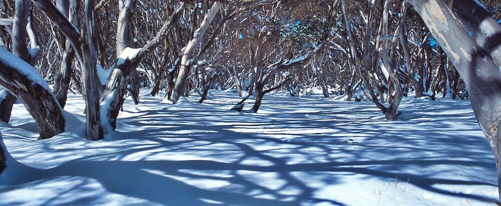 Snow Gums and Shadows by John Barratt