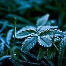 Frost by Lee Jones