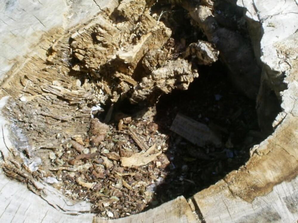 big tree stump by oilersfan11