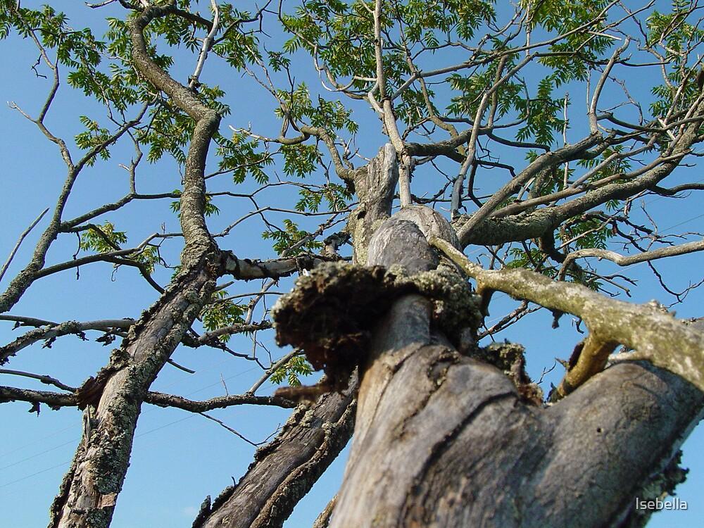 wig_tree by Isebella