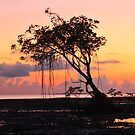 Mangrove Tree At Midge by Michelle Munday