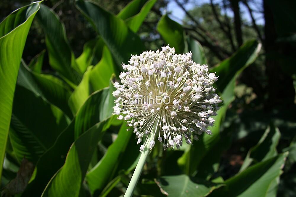 Garlic Bloom by smiln60