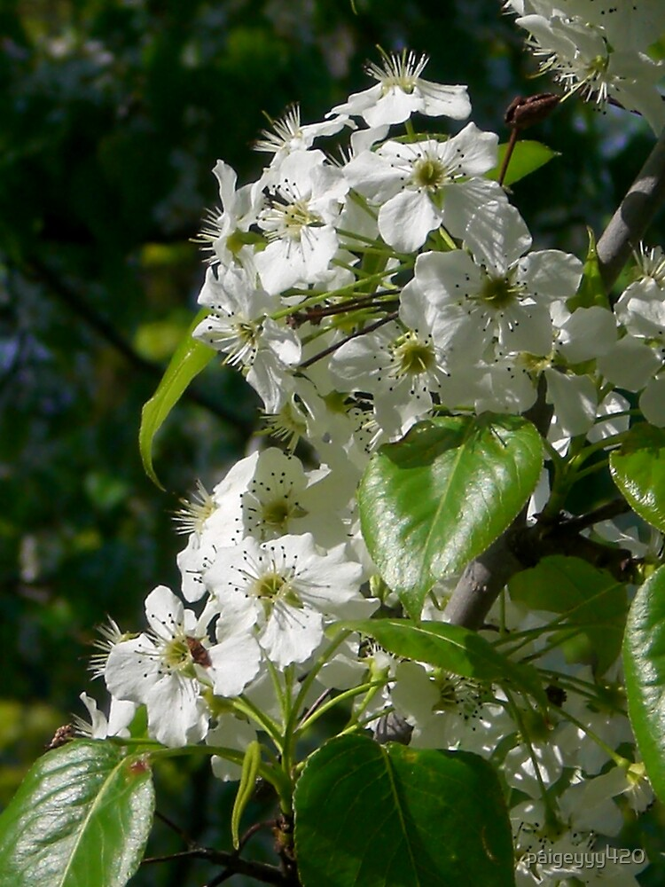 white flowers by paigeyyy420