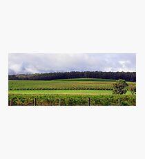 Pemberton Vineyard Panorama  Photographic Print