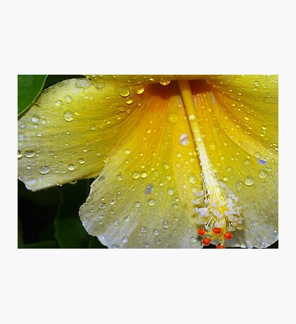 Drenched by a tropical storm Photographic Print