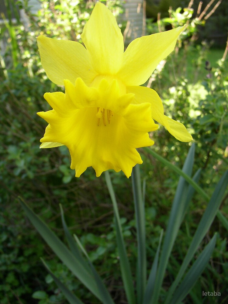 Spring bloom by letaba