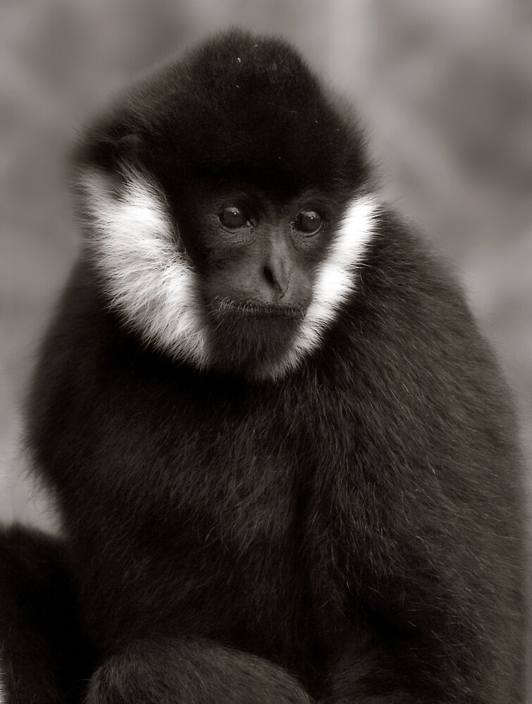 White Cheeked Gibbon  by Natalie Manuel