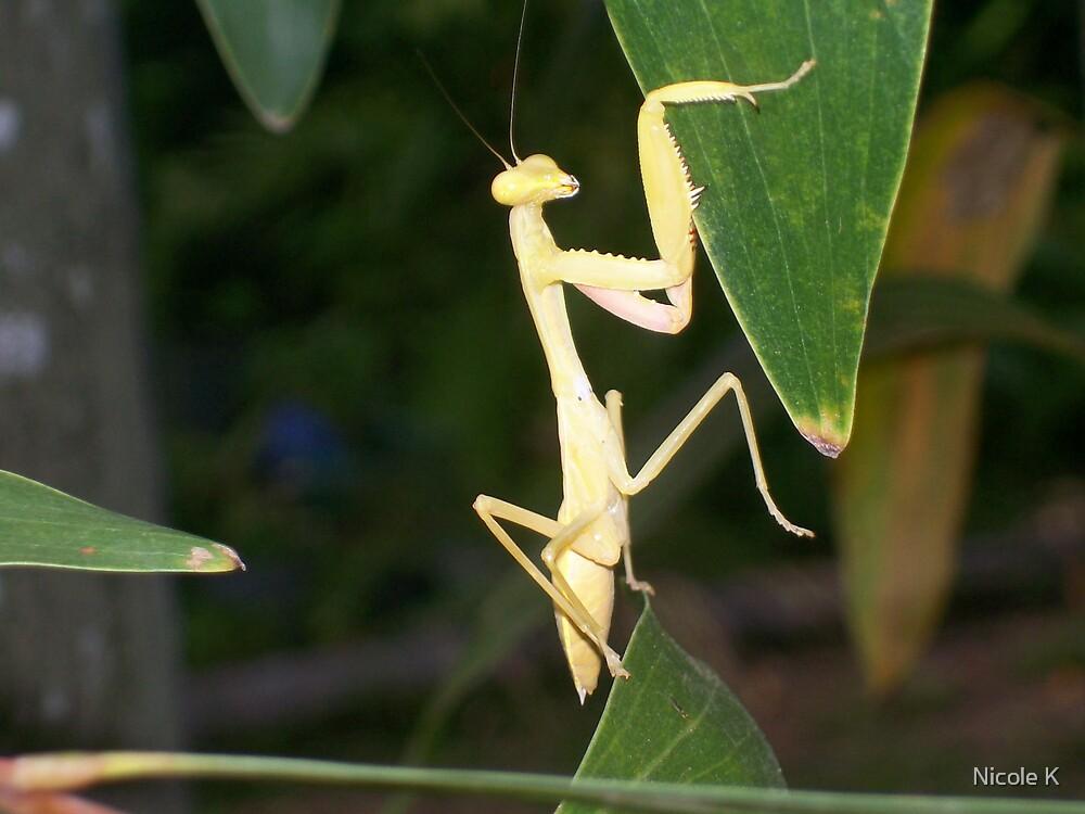 yellow praying mantis by Nicole K