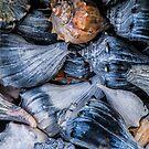 Shell-Leaf by martinilogic