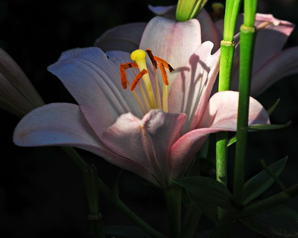 flower by kevin  wiebold