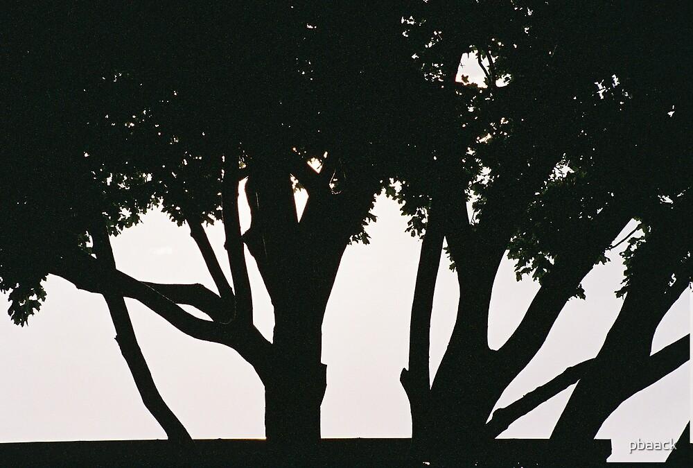 Imagine a Tree by pbaack