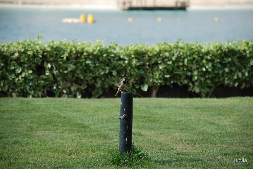 bird by wella