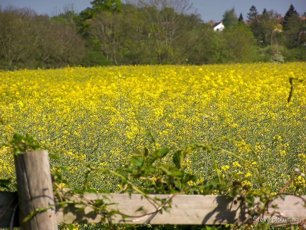 Yellow field by Steve plowman
