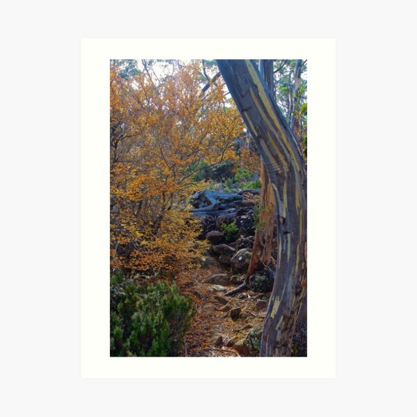 FAGUS ~ SCENES & SCENERY ~ Path by tasmanianartist Art Print