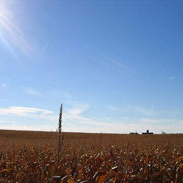Midwest Afternoon by noback