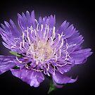 The violet inspiration by Irina777