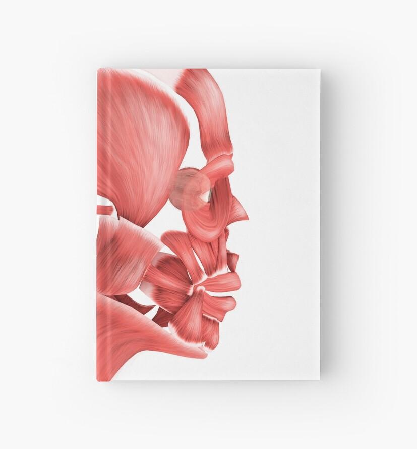 Cuadernos de tapa dura «Ilustración médica de los músculos faciales ...