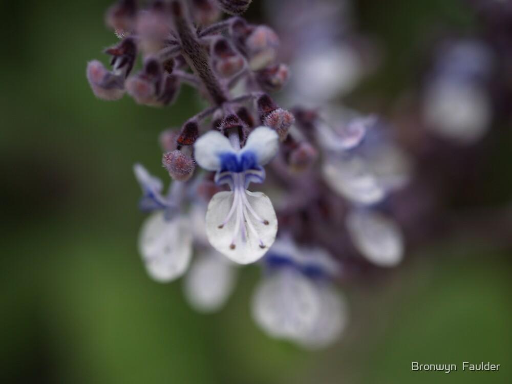 little mauve flower by Bronwyn  Faulder