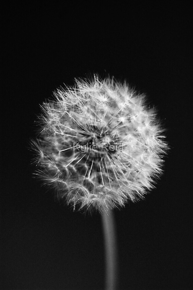 Make a Wish by Kylie Reid