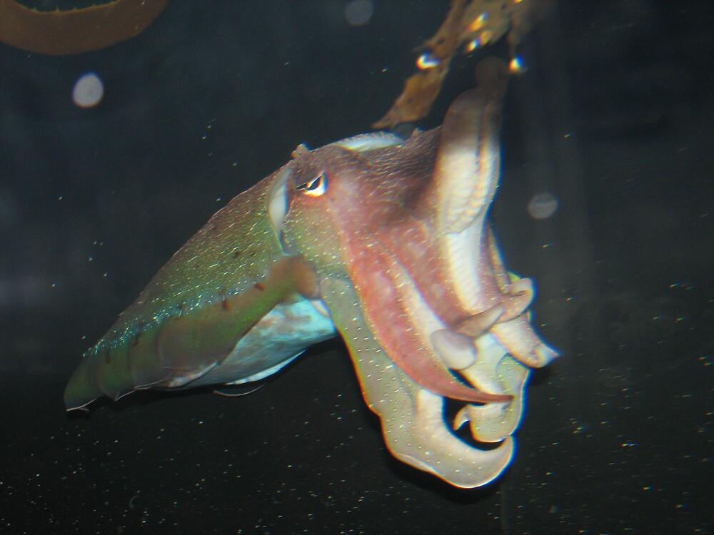 Fish in Sydney Aquarium by satyamroy