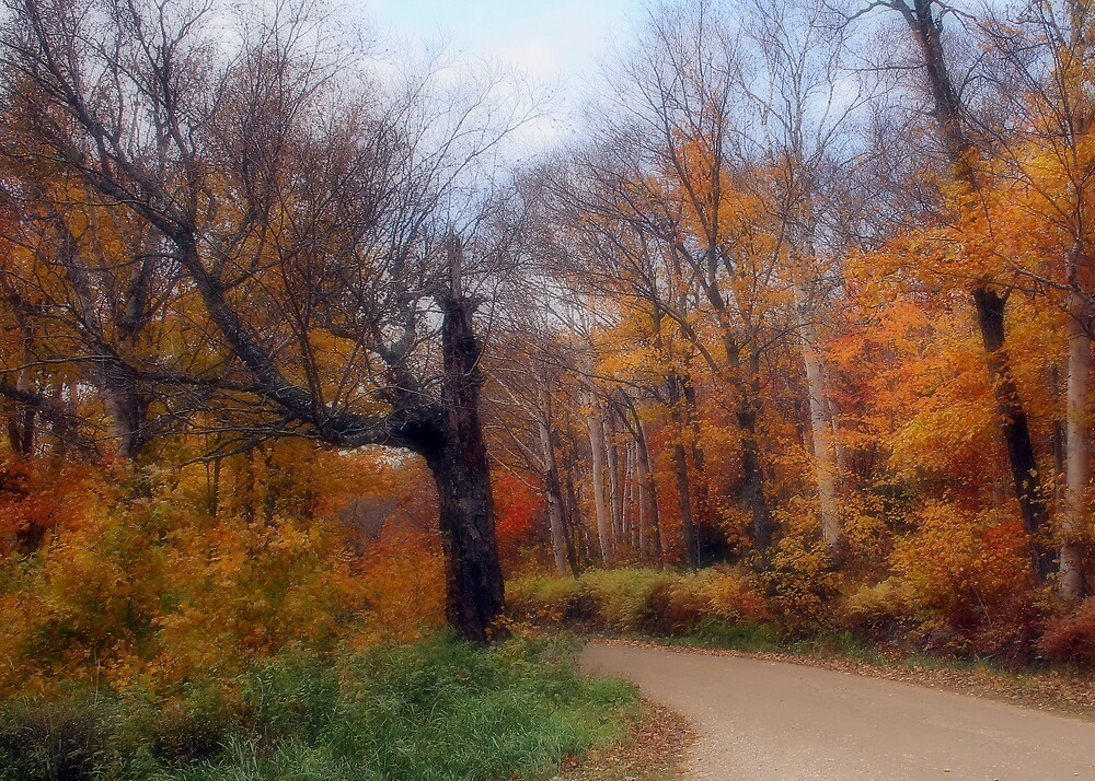 Autumn Road 5x7 by ScottSherman
