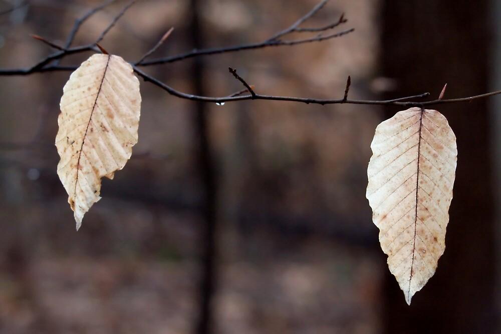 Leaf Brothers by ScottSherman