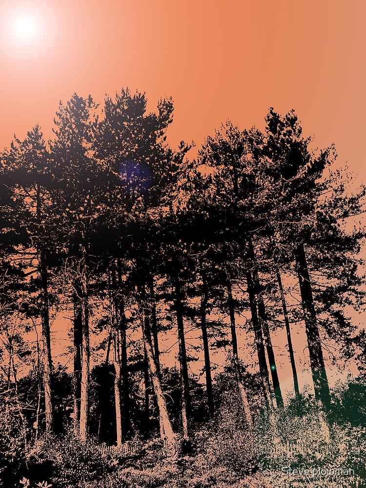 Tall trees by Steve plowman