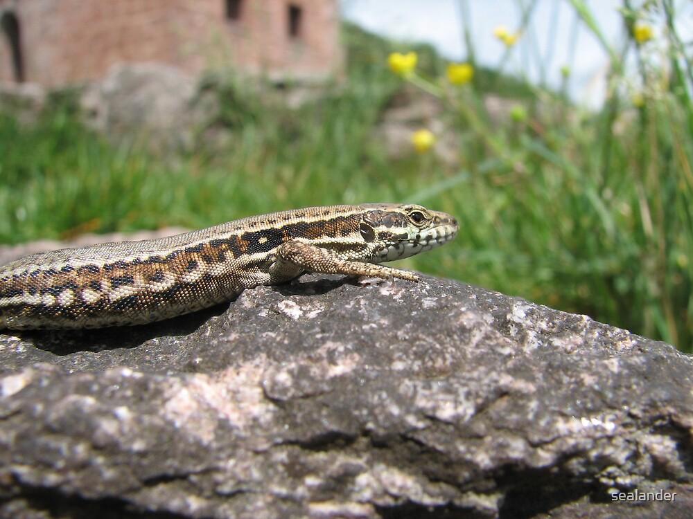 Lizard by sealander