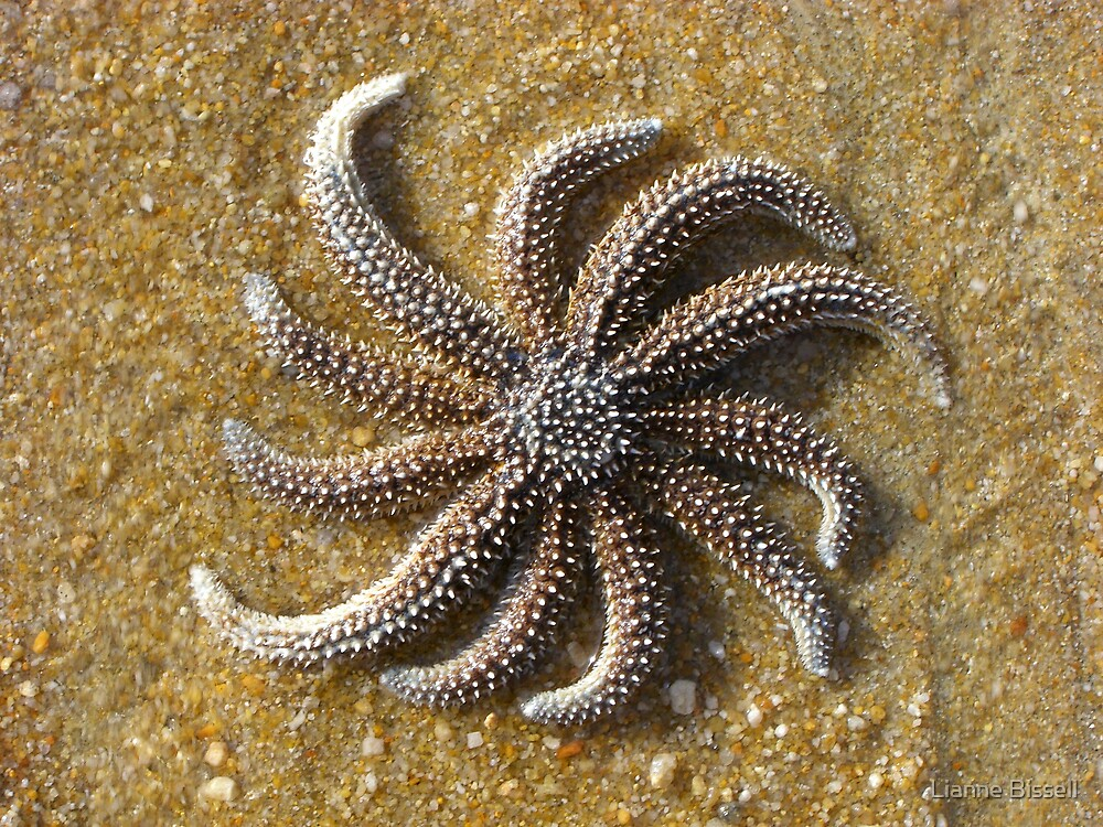 starfish on the beach by Lianne Bissell