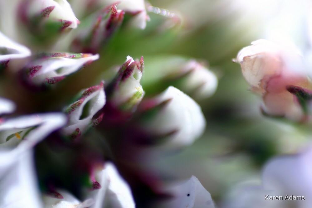 Weed flower by Karen Adams