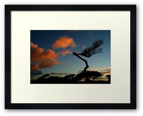 Wind Swept, Torquay,Start of the Great Ocean Road by Joe Mortelliti