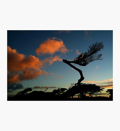 Wind Swept, Torquay,Start of the Great Ocean Road Photographic Print