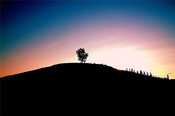 Ratchaphurk tree by huekoe