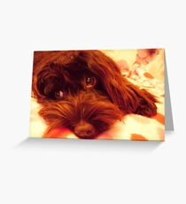 Cockapoo Puppy watching Telly Greeting Card