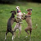 Wog Dogs Dancing by whippeteer