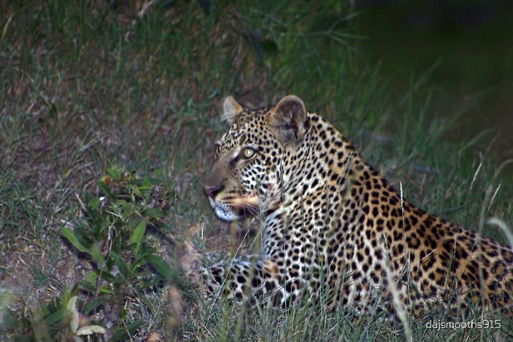 cheeta by dajsmooths915