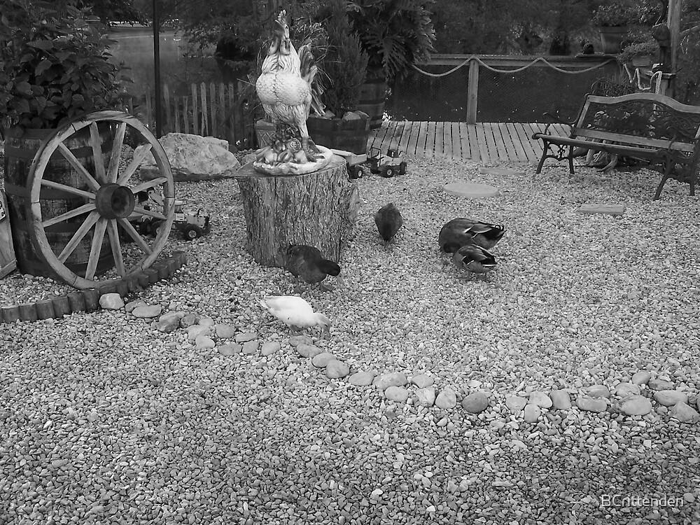 Ducks by BCrittenden