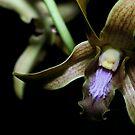 Orchid by Brett Habener
