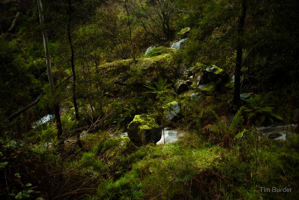 Mossy Rocks 1 by Tim Burder