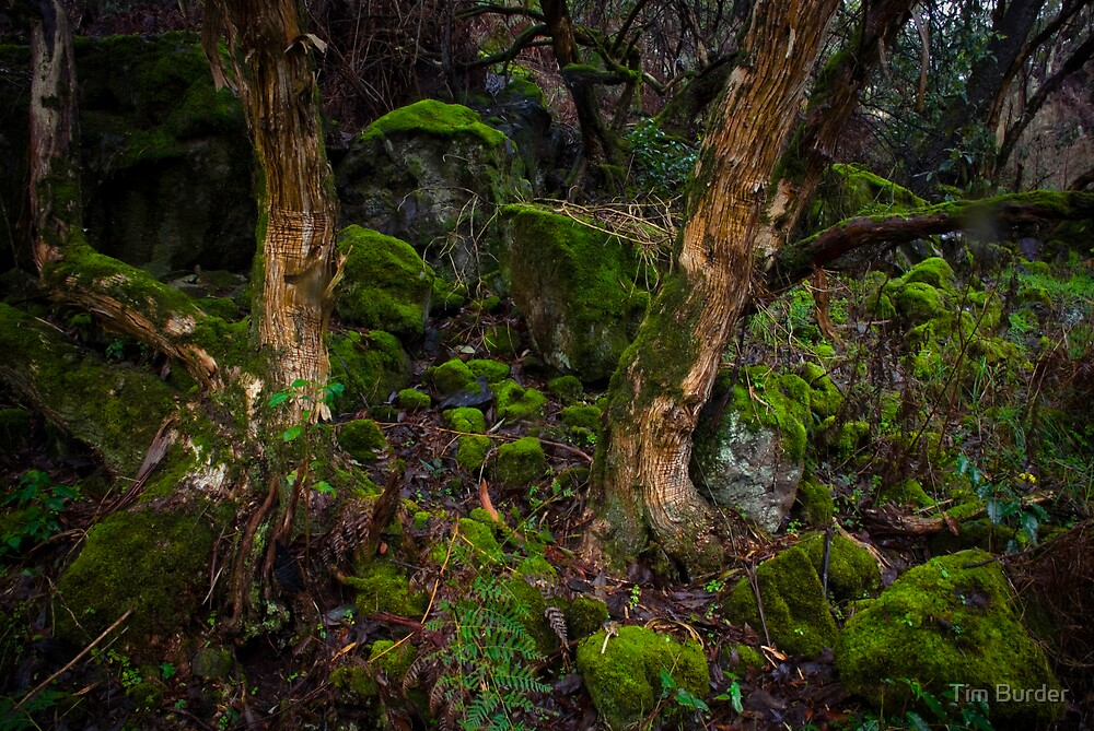 Mossy Rock 2 by Tim Burder