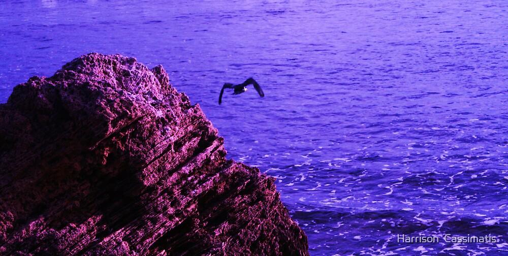 Sea Rock Bird by Harrison  Cassimatis